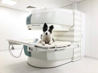 Nelly, die erste Patienten, war bereits kurz nach der MRT wohlauf.